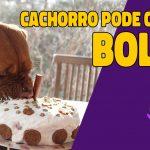 cachorro pode comer bolo?