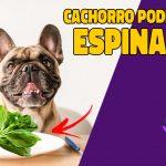 cachorro pode comer espinafre?