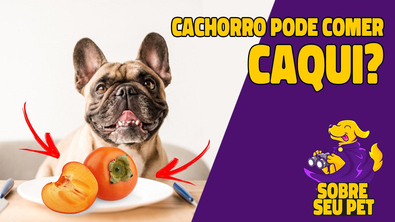 cachorro pode comer caqui?