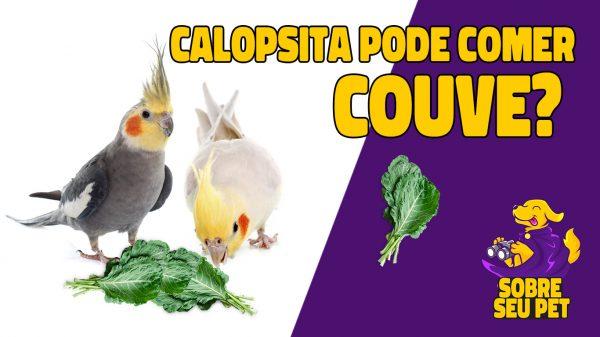 calopsita pode comer couve