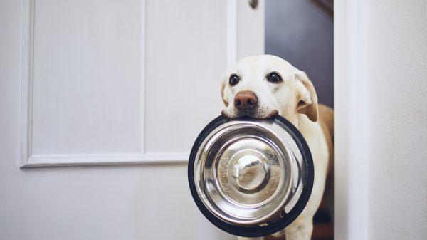 cachorro pode comer hamburguer?