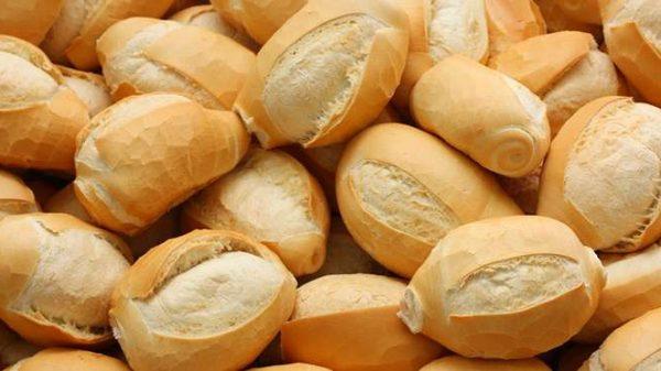 calopsita pode comer pão?
