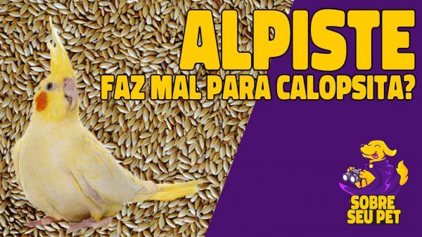 calopsita pode comer alpiste?