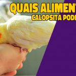quais alimentos a calopsita pode comer?