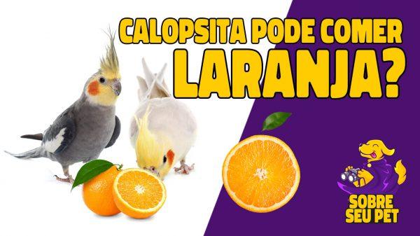 Calopsita pode comer laranja?