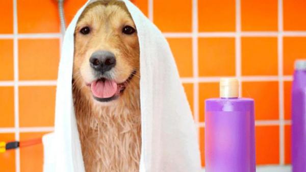 Pode dar banho em cachorro com detergente